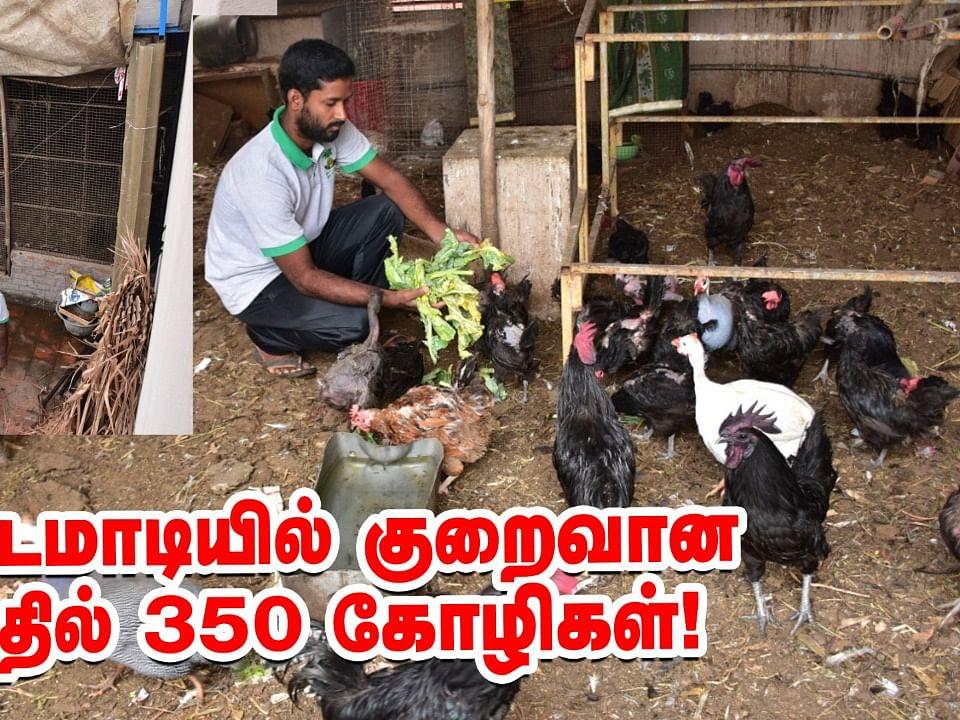 சென்னைக்குள் மொட்டை மாடி கோழி வளர்ப்பு!   Poultry Farming