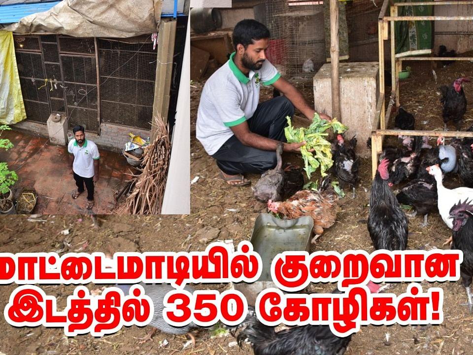 `மொட்டை மாடியில் குறைவான இடத்தில் 350 கோழிகள் வளர்க்கலாம்!' - கலக்கும் சென்னை இளைஞர்