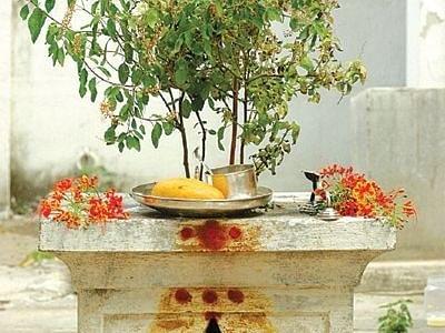 நீண்ட ஆயுள் அருளும் துளசி வழிபாடு... கவனிக்க வேண்டிய 5 விஷயங்கள்
