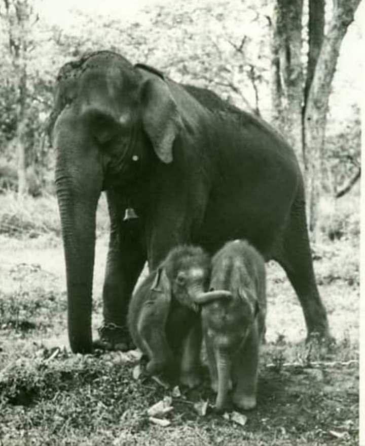 sujay&vijay with mother devaki