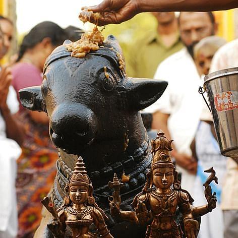 நந்தி - பிரதோஷம்