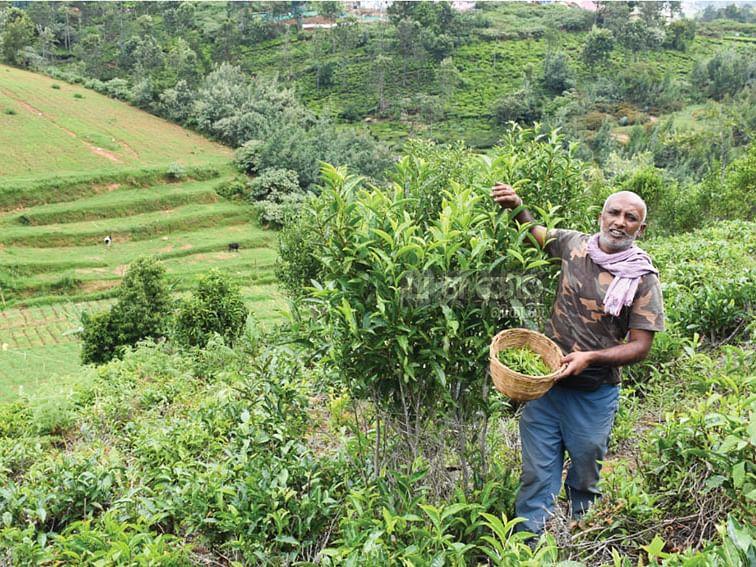 கிரீன் டீ, ஒயிட் டீ, ஊலாங் டீ... மதிப்புக்கூட்டல் தேயிலையில் மாதம் ₹47,000