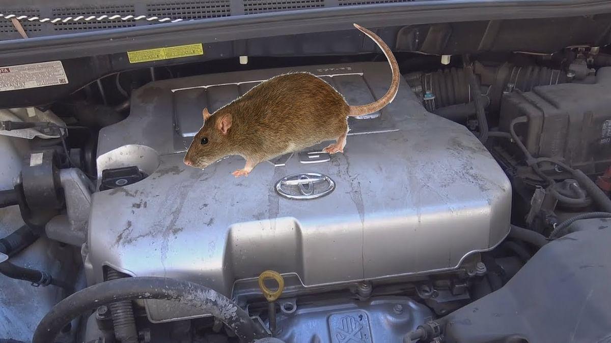 Avoid car rat issue