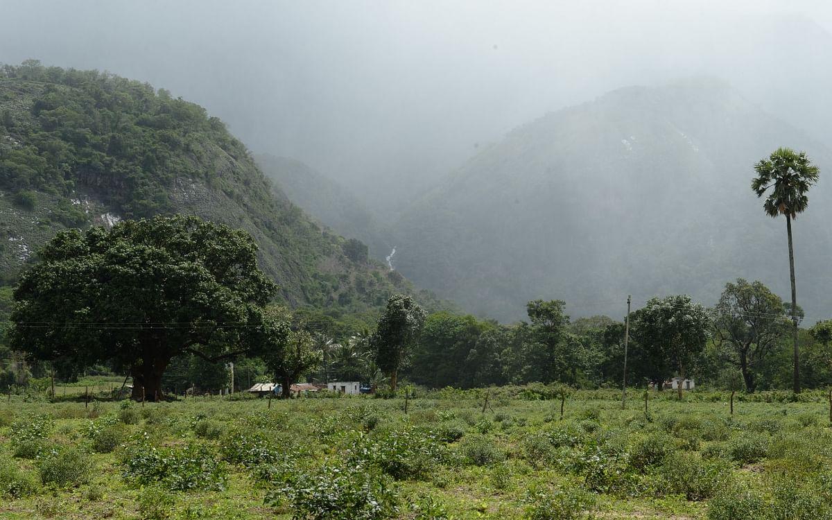 கோவை வனப்பகுதியில் சேர்க்கப்பட்ட 1,049 ஹெக்டேர் நிலம்! - ஆட்சியர் நாகராஜன் அதிரடி உத்தரவு