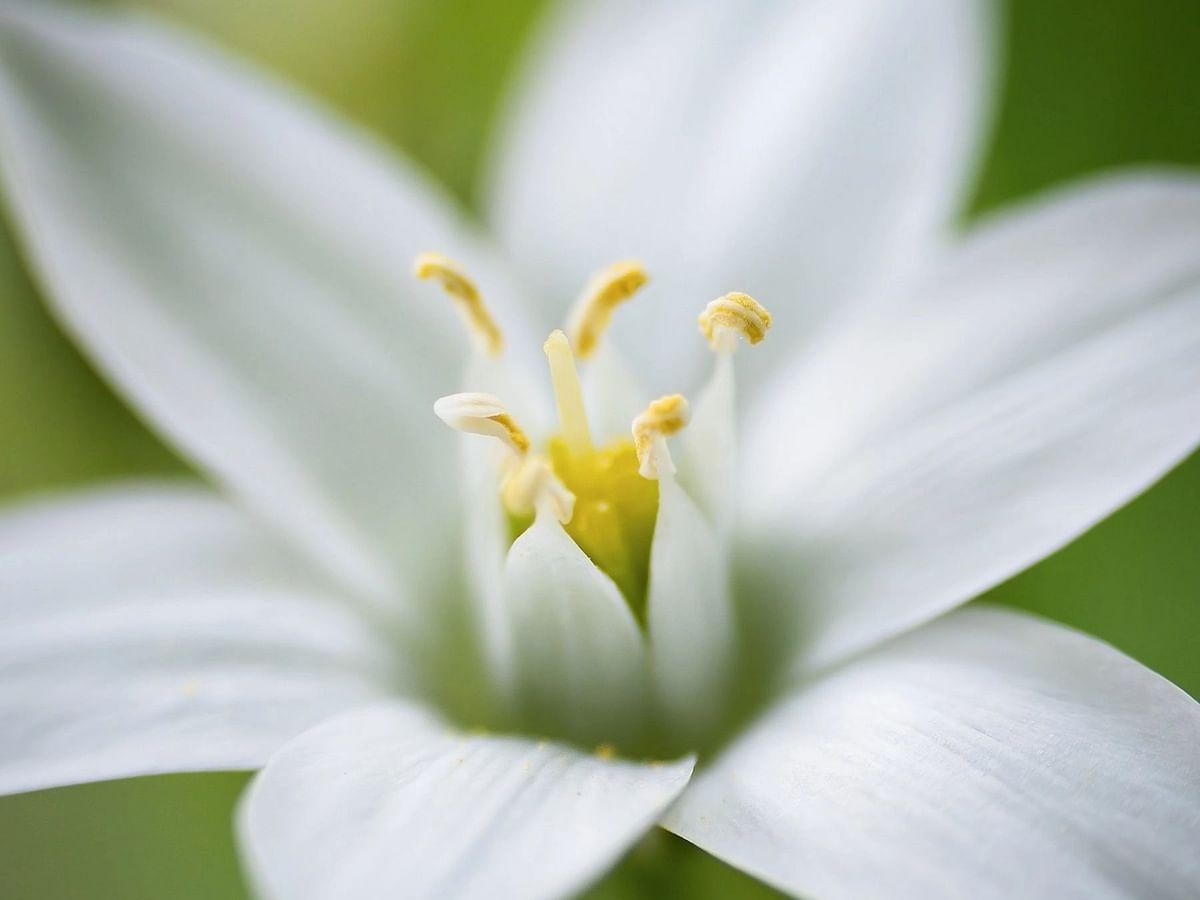 புத்தம் புது காலை : 'குலேபகாவலி' கதையும், ஓர் ஆண்டுக்கு ஒரு முறை பூக்கும் நிஷாகந்தி மலரும்!