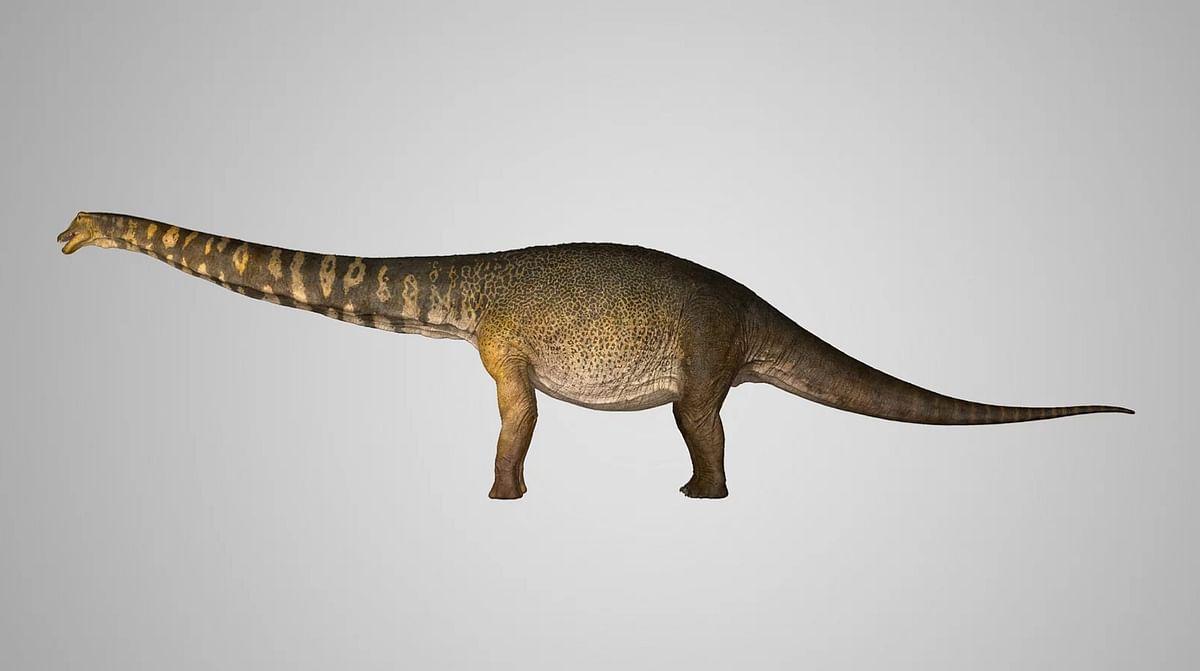 Australotitan cooperensis - கூப்பர்