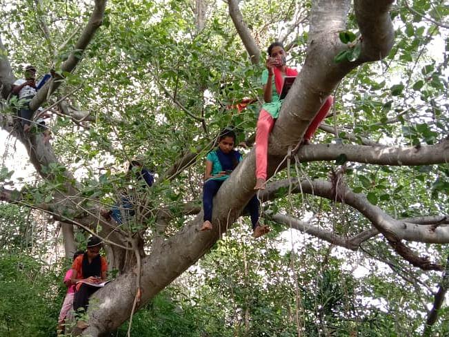 நாமக்கல்: `டவர் இல்லை; ஆன்லைன் கிளாஸுக்குச் சிரமம்!' - சிக்னலுக்காக மரத்தில் ஏறும் மாணவ, மாணவிகள்