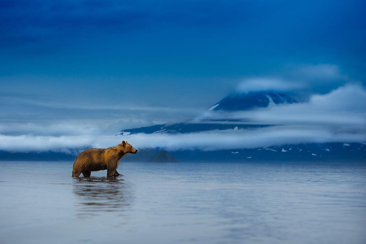 Nature through a lens! a wild perspective...