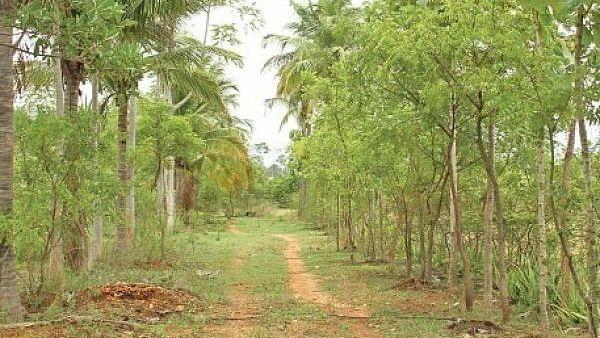 Agri Trees