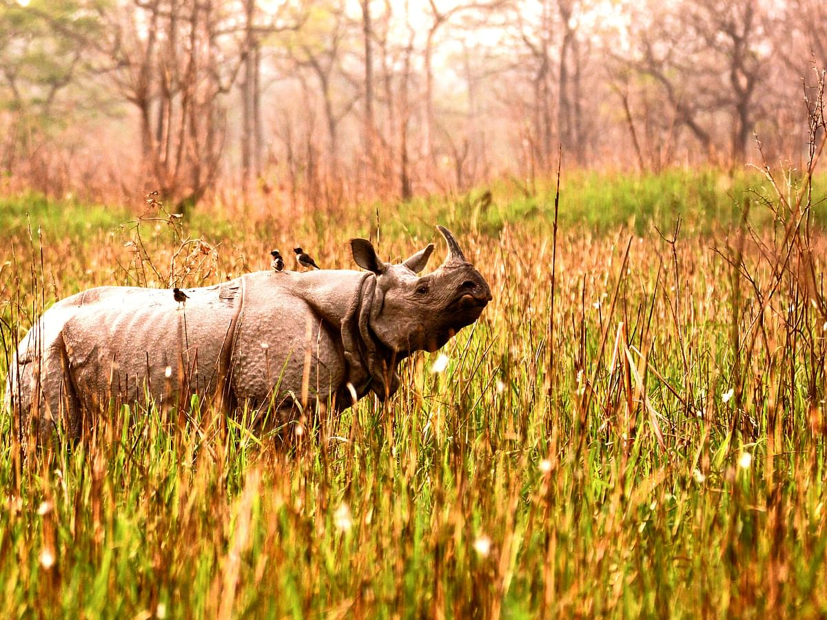 Road trips in Northeast India