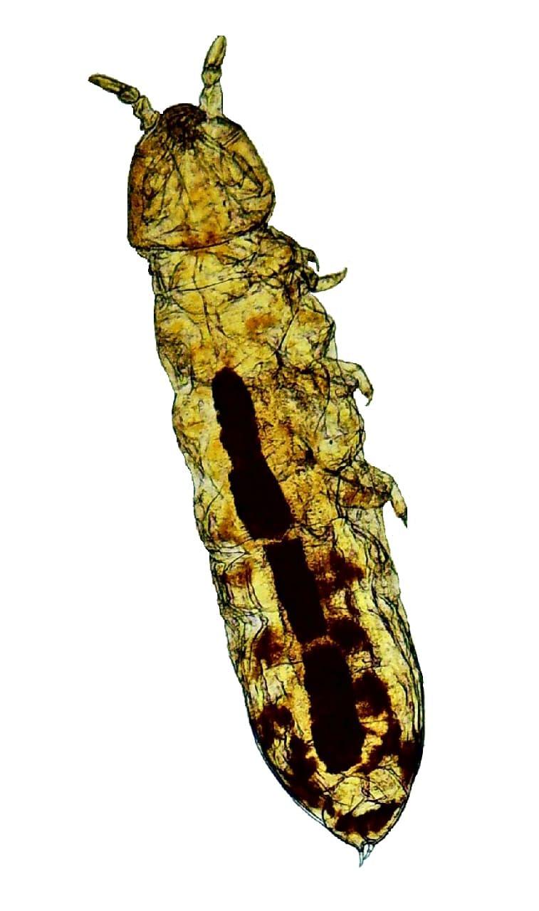 புதிய வகை நுண்ணுயிரி