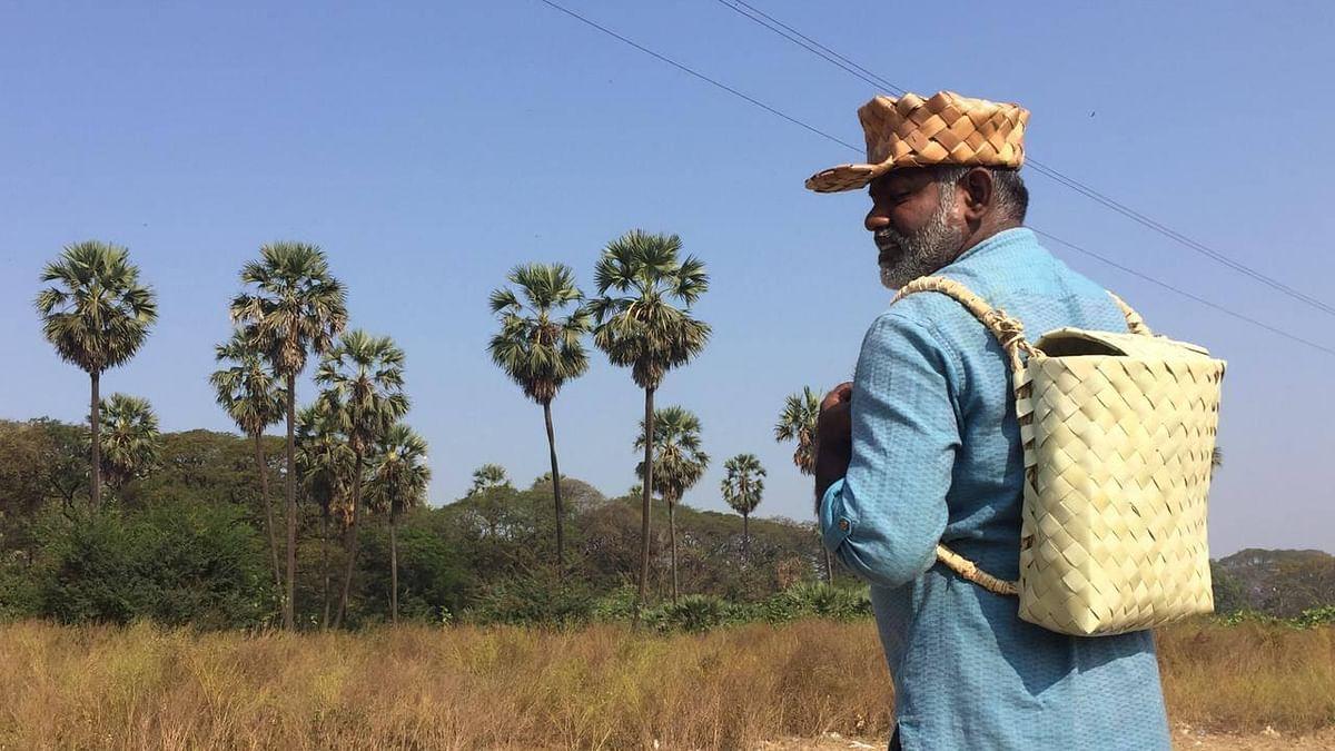 பனை மர ஆராய்ச்சியாளர் காட்சன் சாமுவேல்