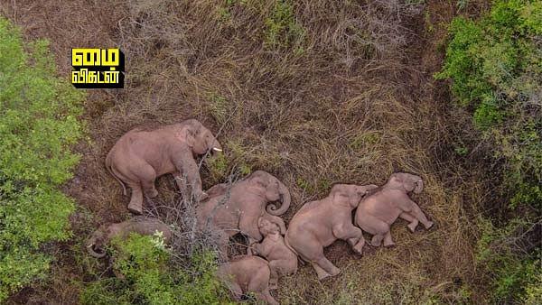 China's wild elephants