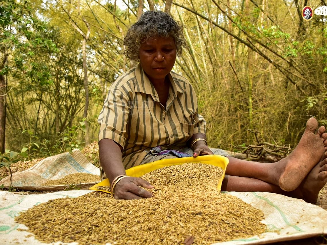 வேளாண் பட்ஜெட்: `பழங்குடிகளும் இனி பயன்பெறுவர்!' - சிறுதானிய பதப்படுத்தும் மையத்திற்கு வரவேற்பு