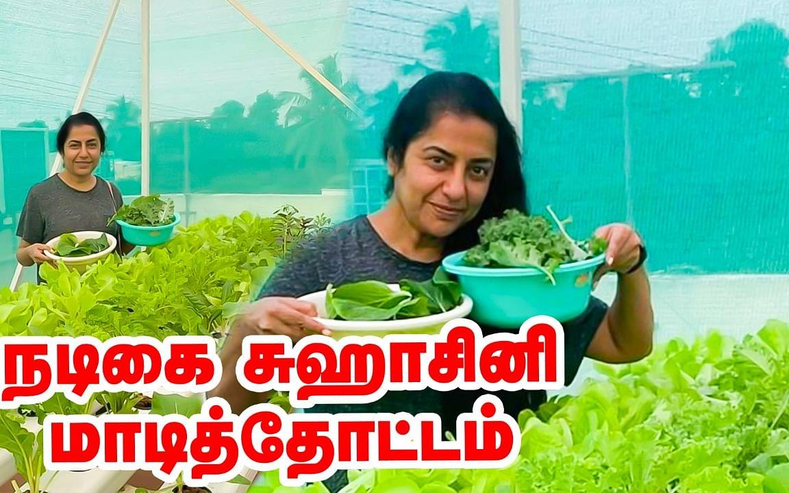 நடிகை சுஹாசினியின் மாடித்தோட்டம் | Actress Suhasini Terrace garden