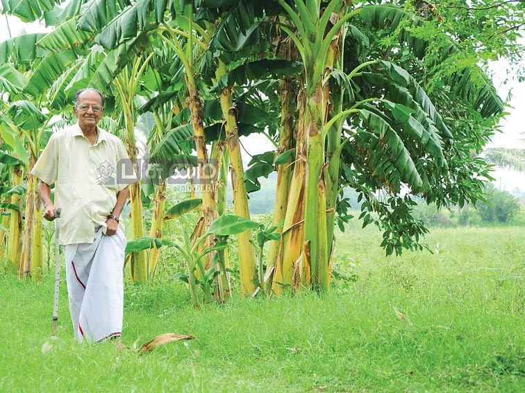 ஆண்டுக்கு, ரூ.3 லட்சம் -  நெல், தென்னை, வாழை, பால்...  83 வயது இளைஞரின் இயற்கை விவசாயம்!