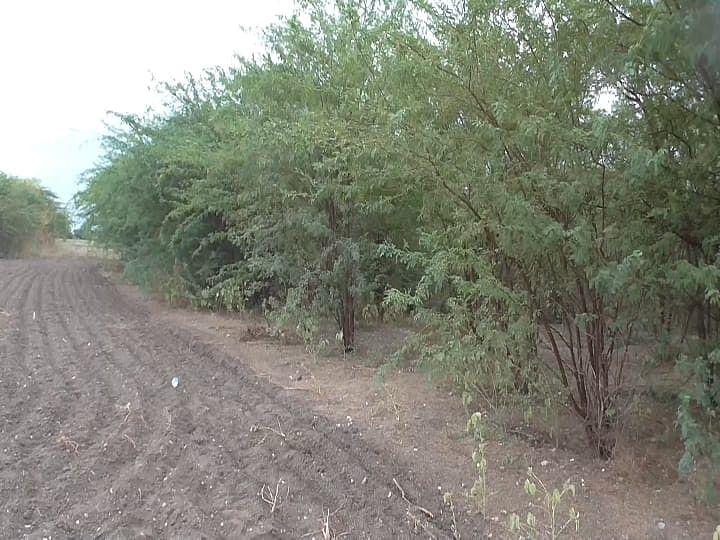 முருகனை கொலை செய்த மேலக்கரந்தை காட்டுப்பகுதி