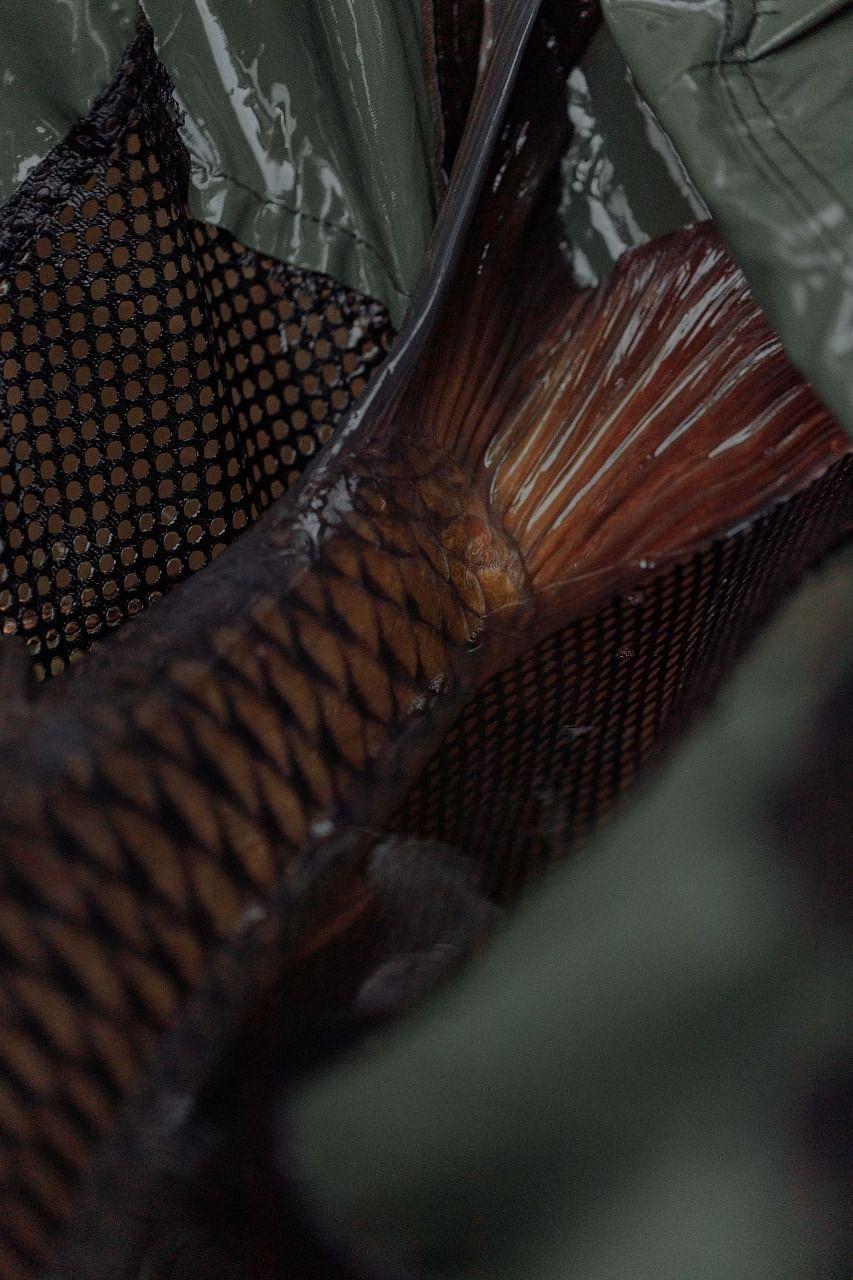 Ghol Fish (Representational Image)