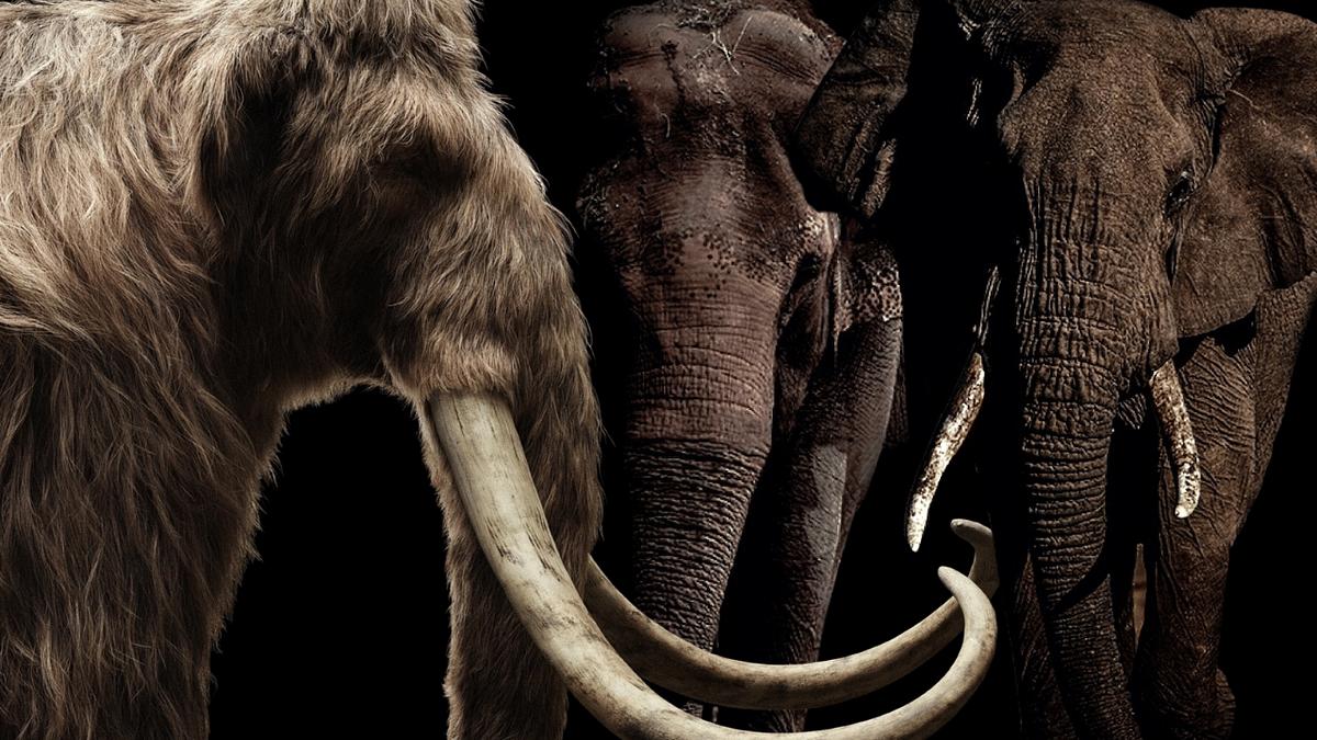 மாமூத் & ஆசிய யானைகள்