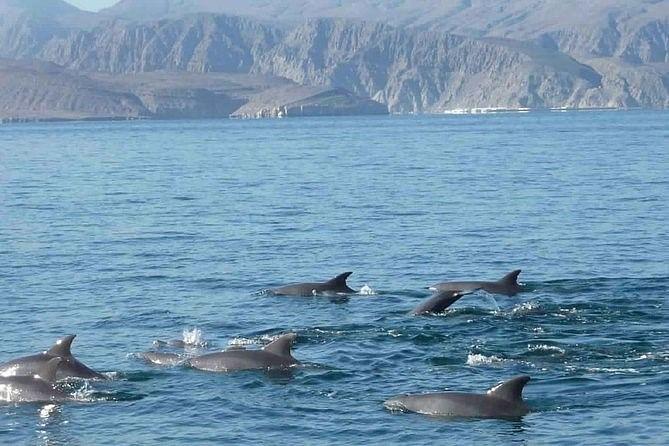 Dolphin watching, Kasab.