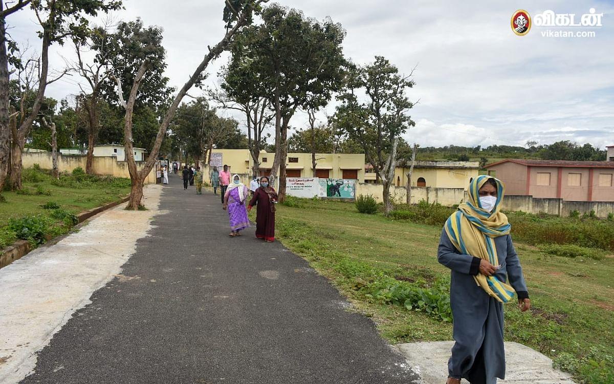 உள்ளாட்சித் தேர்தல்: T23 புலி அச்சத்தையும் மீறி வாக்குகளைப் பதிவு செய்து வரும் மசினகுடி மக்கள்
