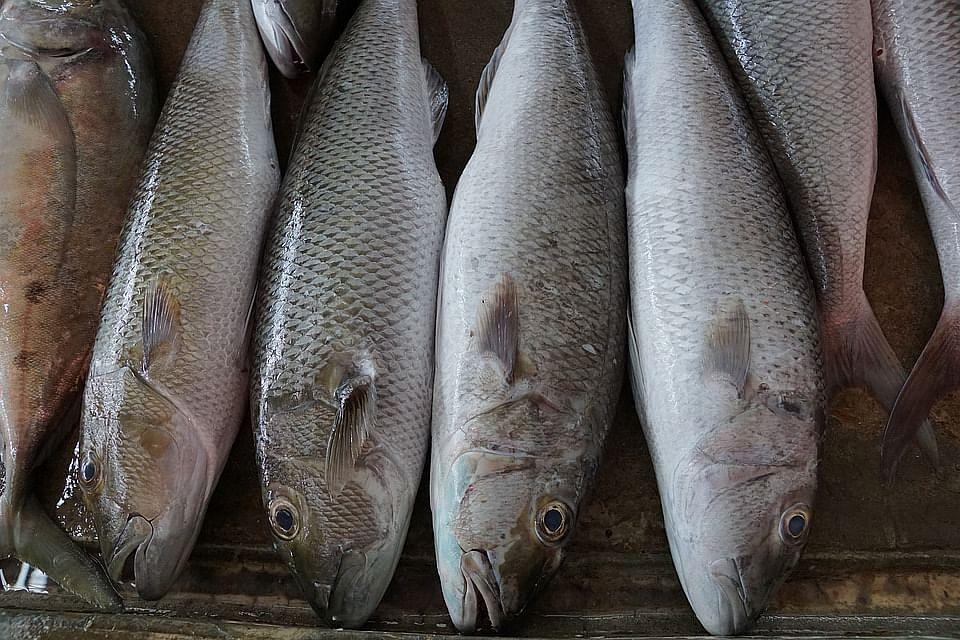 fish fish Tamil News Spot