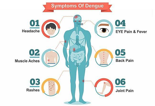 vikatan 2020 07 6cc4a74e cbdc 4e03 bb71 bc21a3728680 Dengue symptoms Tamil News Spot