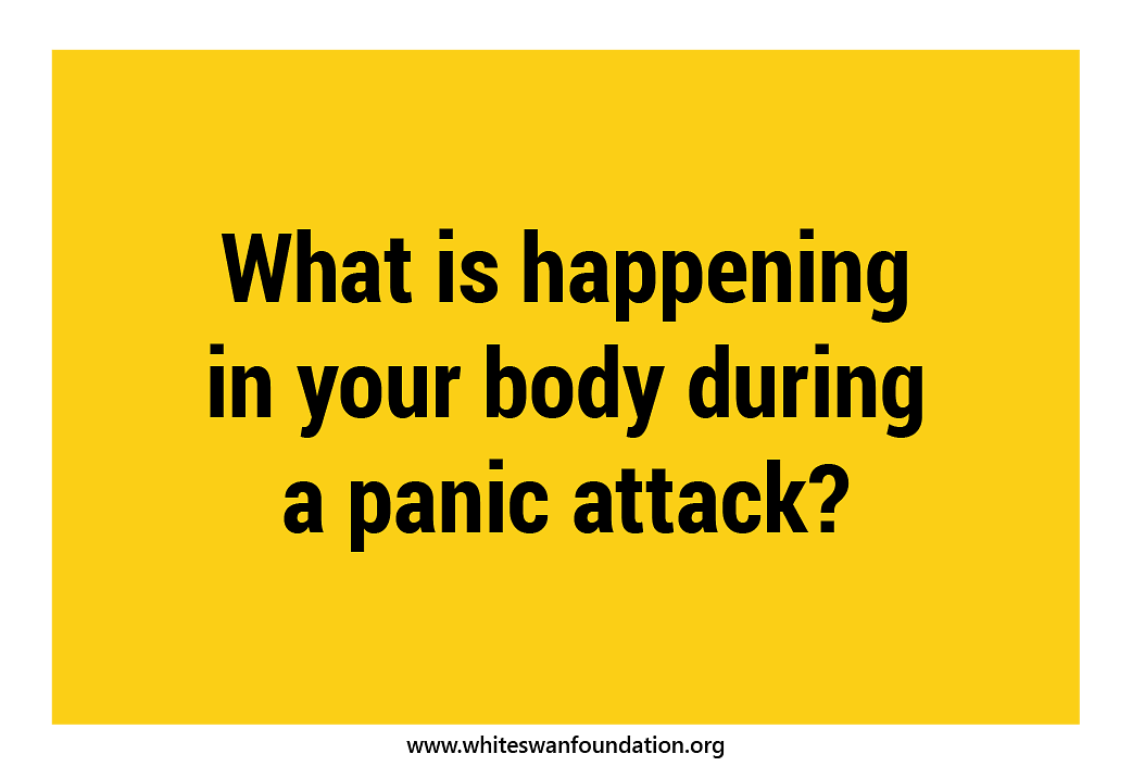 What is happening to your body during a panic attack?