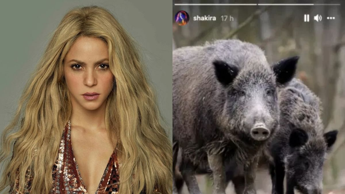 Wild boars 'attack' singer Shakira, eight-year-old son in Barcelona park