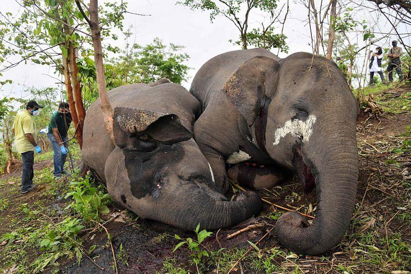 Lightning kills 18 elephants in India