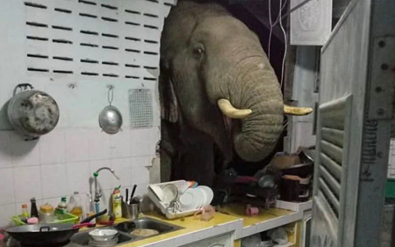 Elephant smashes through kitchen wall, steals bag of rice