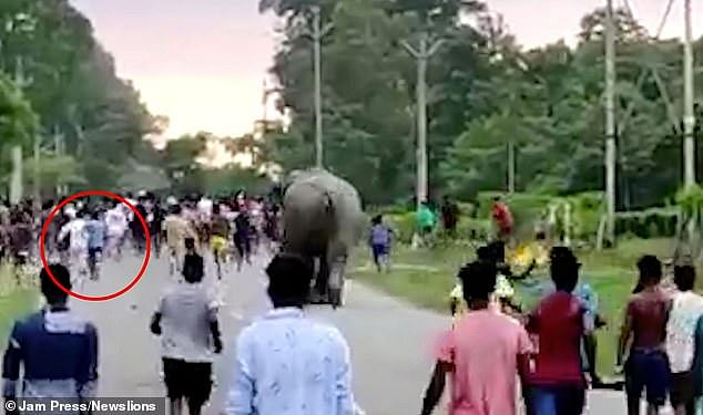 Elephant crushes boy to death in India