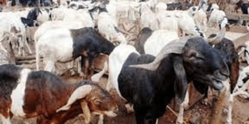 Eid-el-Kabir: Ram sellers lament low patronage in llorin