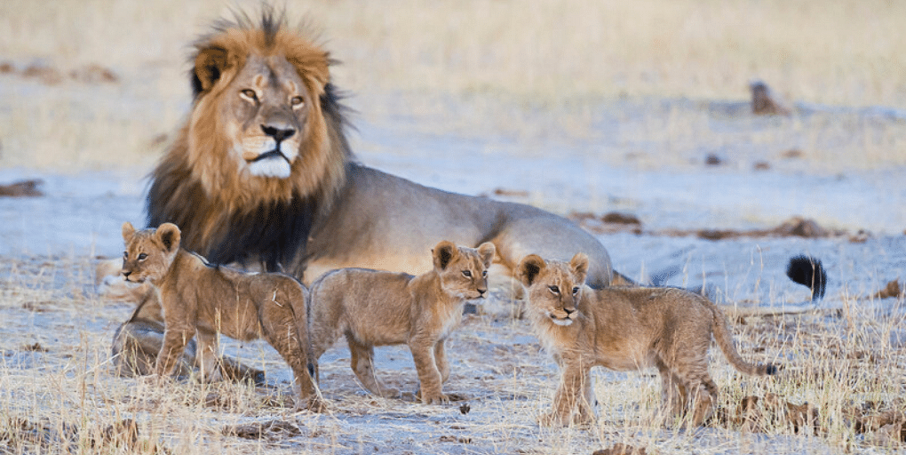 Wilderness Safaris Welcomes Guests to Hwange National Park