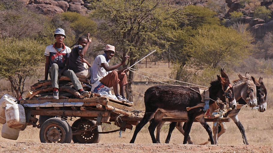 Donkey cart transport in rural Botswana
