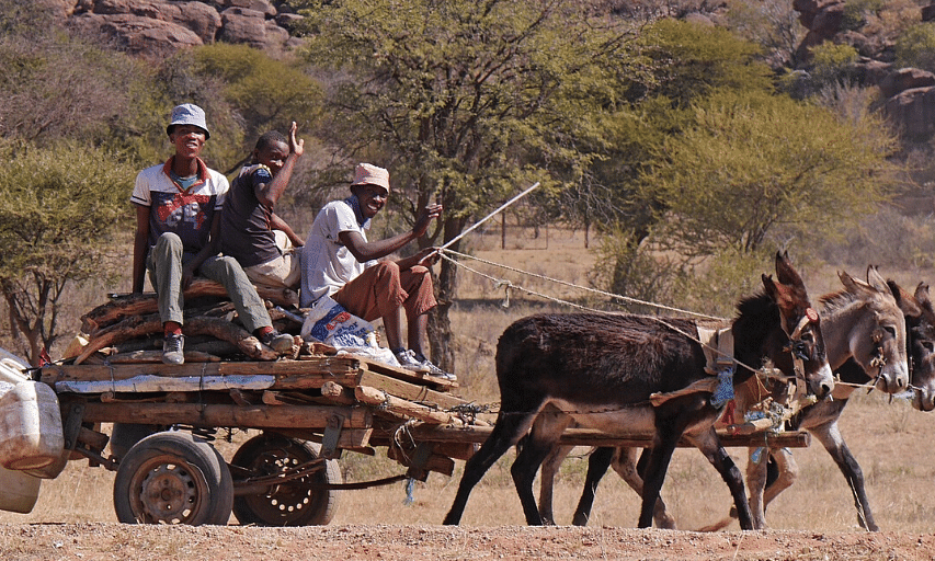 Donkey cart transport in rural Botswana