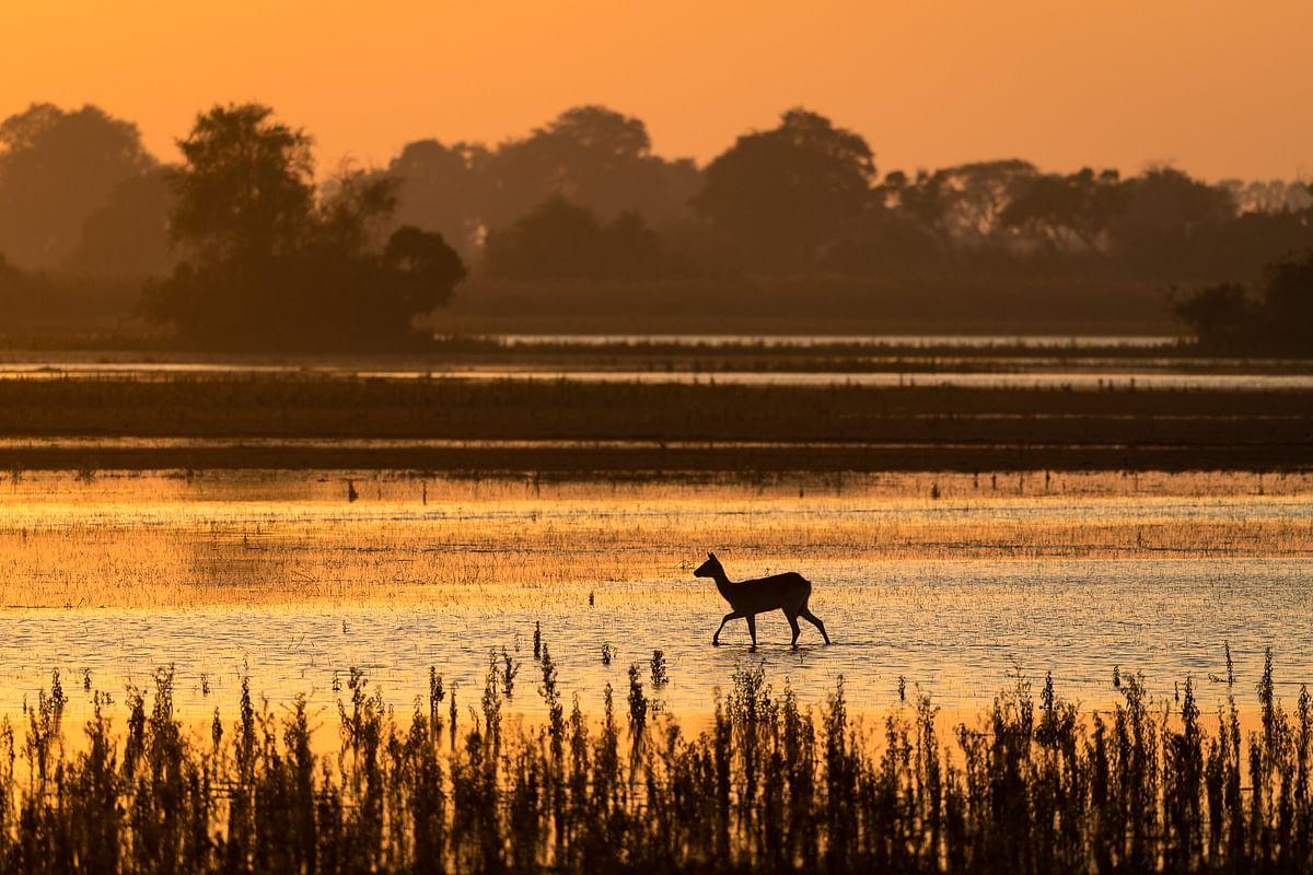 Antelope at dusk