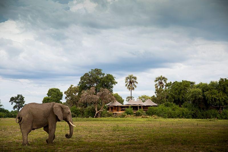 Elephant outside camp