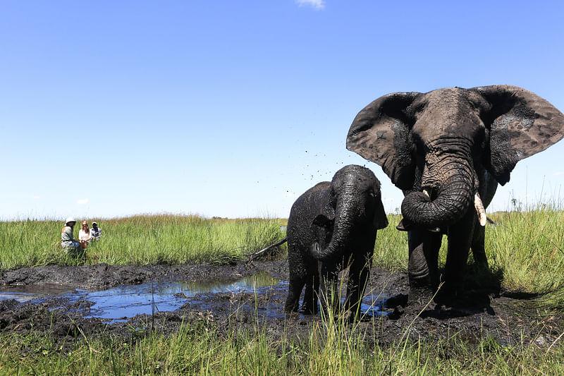 Impromptu mud bath