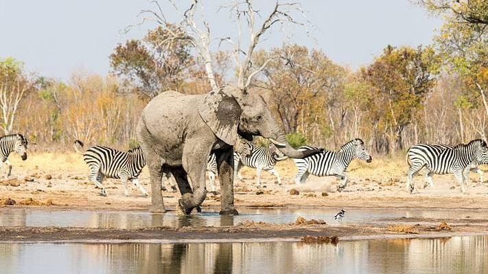 Wilderness Safaris' Hwange Concessions Reveal Wildlife Densities