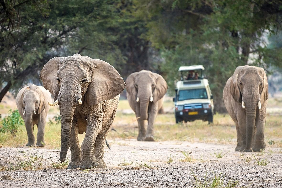 Wilderness Safaris Namibia Offers Ideal Travel Circuit
