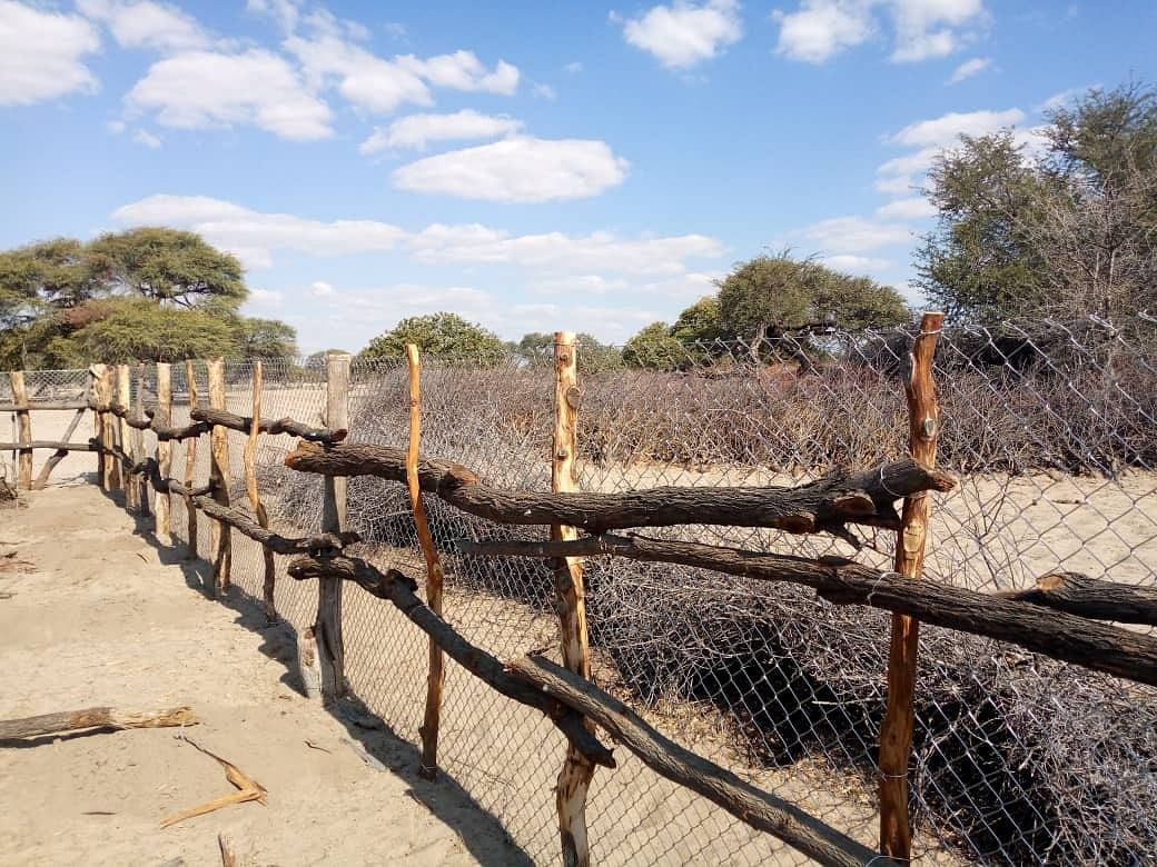 Wilderness Safaris Supports Lion Conservation Project In Botswana