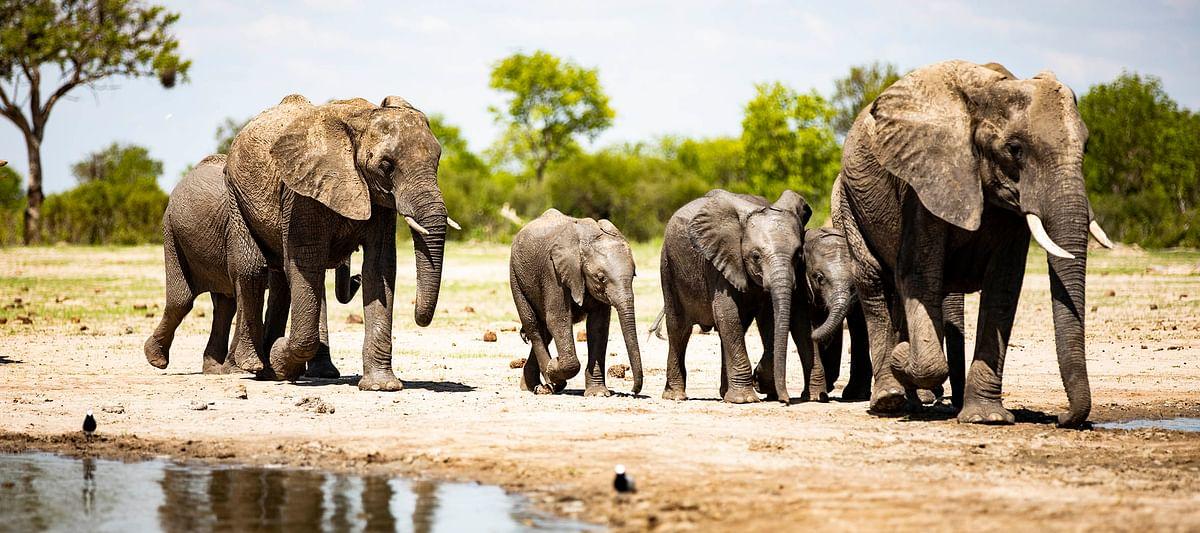 COVID-19 Testing in Wilderness Safaris' Hwange Camps in Zimbabwe