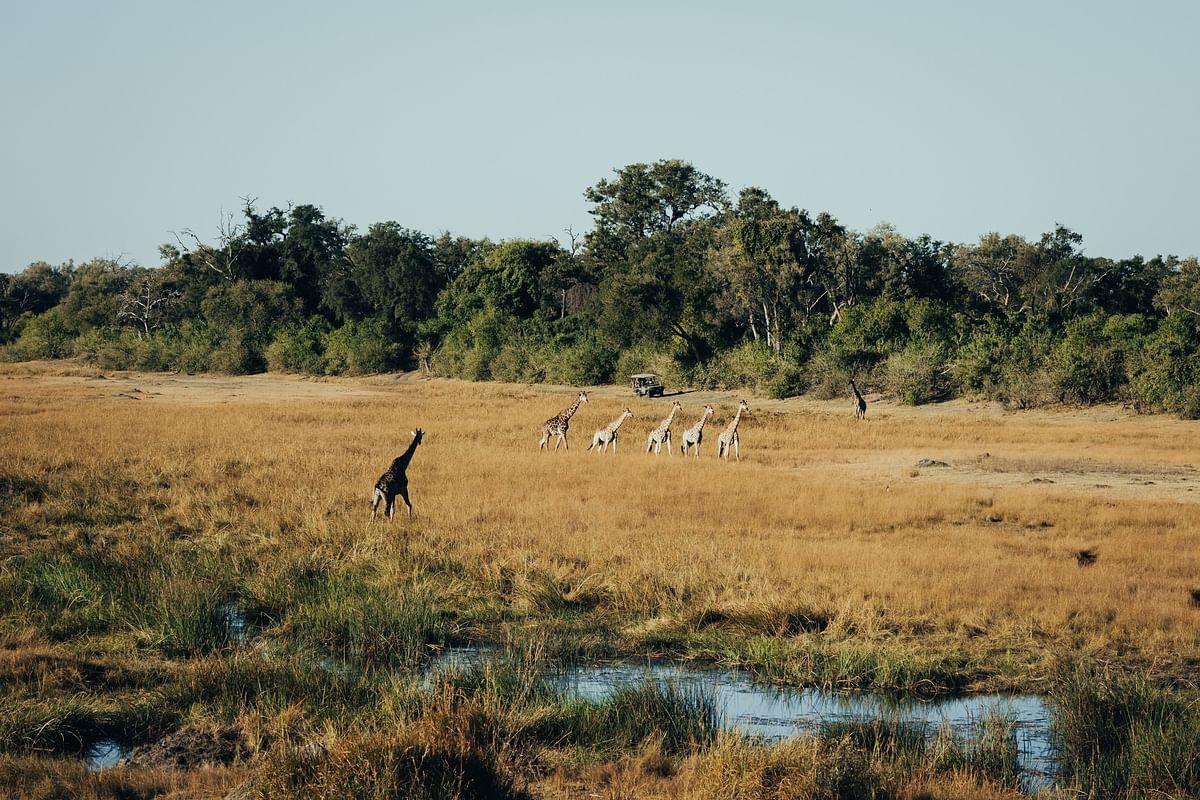 Ultimate African Safari - Spotlight on King's Pool, Botswana