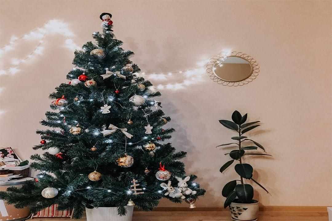 Merry Christmas 2019: 'क्रिसमस ट्री' सजाने का है बहुत रोचक इतिहास, जानें, क्यों है इस पेड़ से इतना लगाव