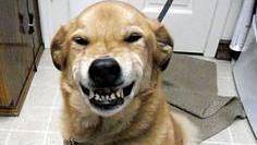 अब काशी के कुत्तों की होगी अलग पहचान... नगर निगम अप्रैल से जारी करेगा ID कार्ड