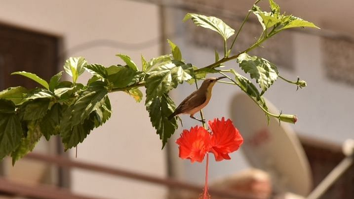 Bird on the flower