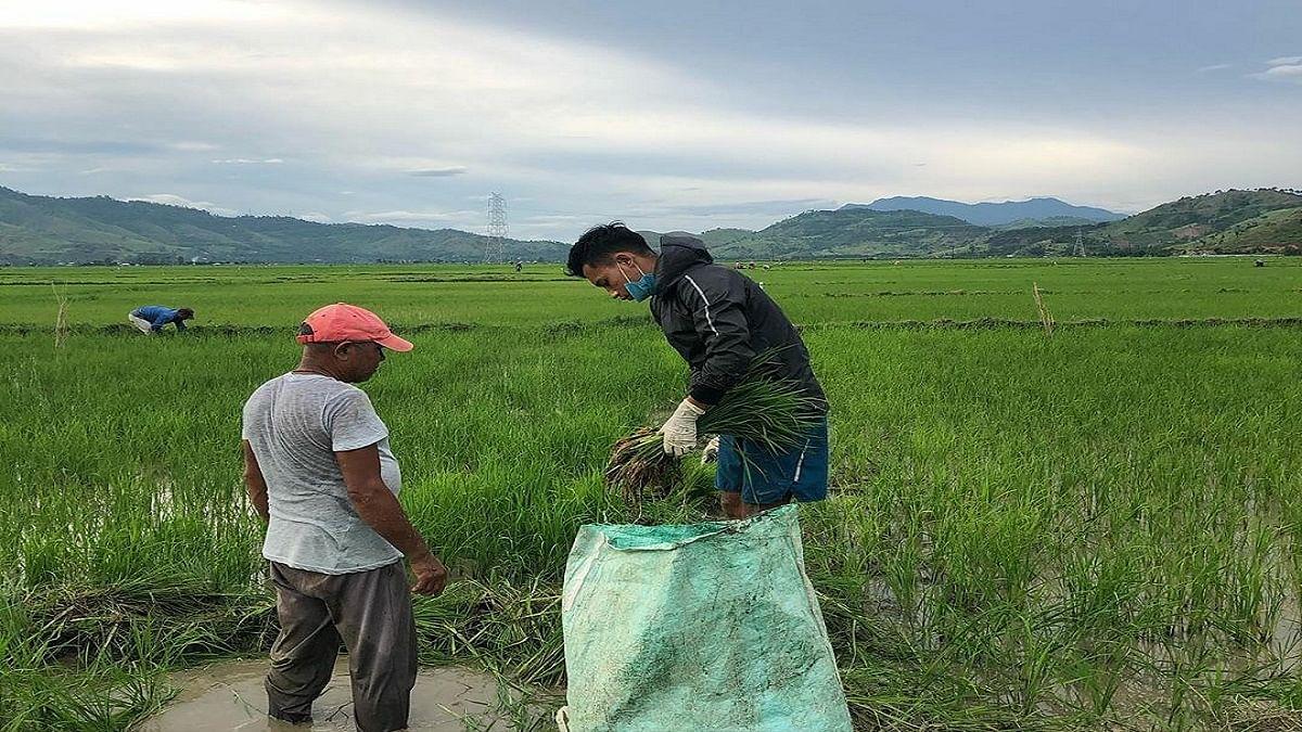 खेतों में काम करके परिवार की मदद कर रहे मिडफील्डर अमरजीत सिंह