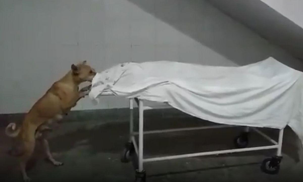 उत्तर प्रदेश: बच्ची के शव को कुत्ते द्वारा नोंचने का वीडियो हुआ वायरल, अस्पताल कर्मचारियों से मांगा गया स्पष्टीकरण