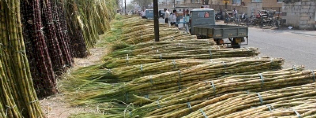 उप्र: विरोध प्रदर्शन के दौरान गन्ना किसान की मौत